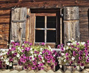 fenêtre fleurie - cantine de barmaz